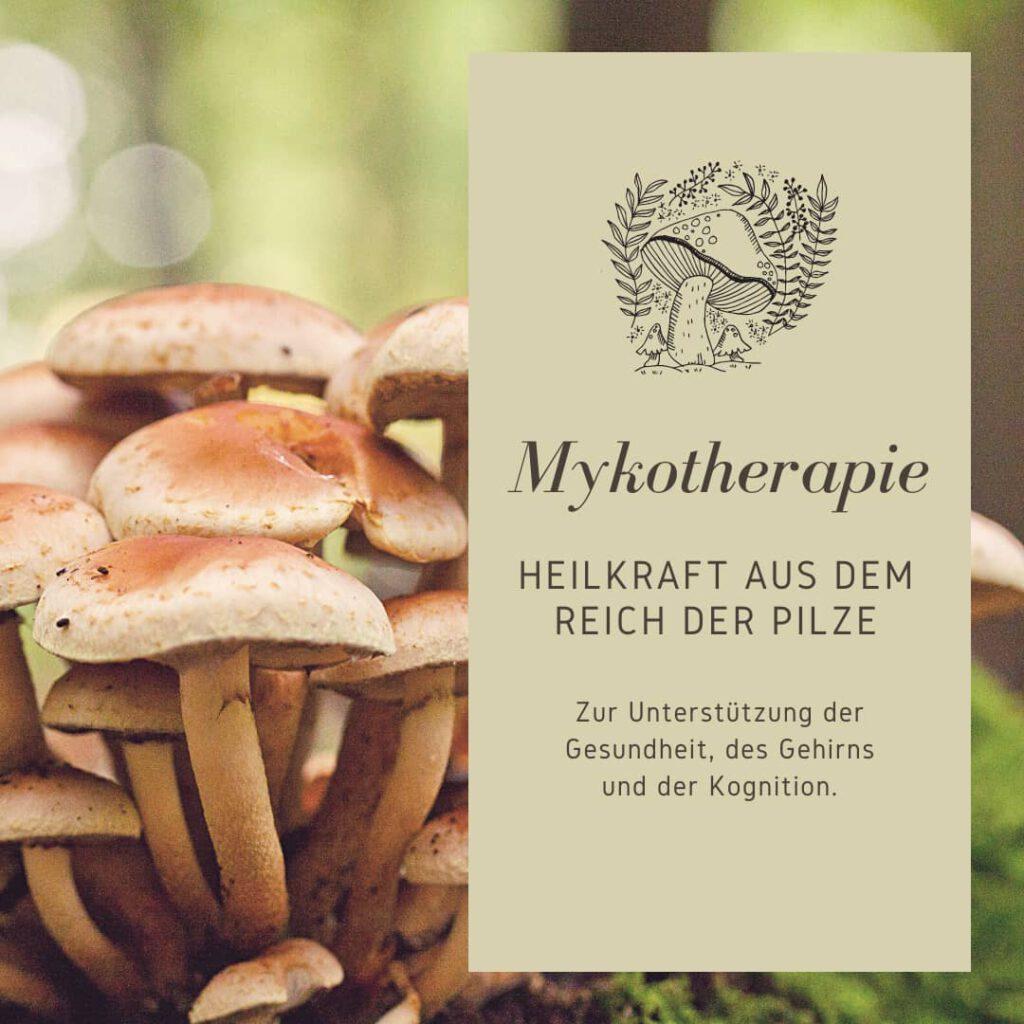 Heilpilze Mykotherapie